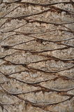 Δέρμα δέντρων με ένα αφηρημένο σχέδιο στοκ φωτογραφία με δικαίωμα ελεύθερης χρήσης