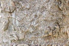 Δέρμα δέντρων Στοκ Φωτογραφία