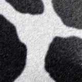 δέρμα αγελάδων Στοκ Φωτογραφίες