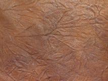 δέρμα ανασκόπησης στοκ εικόνες