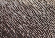 δέρμα ελεφάντων Στοκ φωτογραφία με δικαίωμα ελεύθερης χρήσης