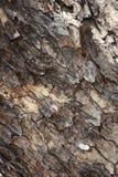 Δέρμα ενός δέντρου Στοκ Φωτογραφία