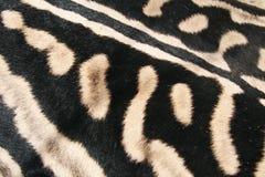 Δέρμα ενός ζέβους Αφρικανού, Στοκ εικόνες με δικαίωμα ελεύθερης χρήσης