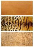 δέρμα ζώων Στοκ εικόνες με δικαίωμα ελεύθερης χρήσης