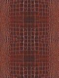 δέρμα κροκοδείλων Στοκ Φωτογραφία