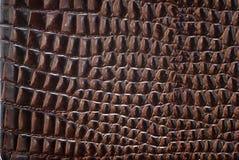 δέρμα κροκοδείλων στοκ φωτογραφίες με δικαίωμα ελεύθερης χρήσης