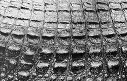 δέρμα κροκοδείλων Στοκ Φωτογραφίες