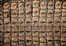 Δέρμα κροκοδείλων Στοκ Εικόνες