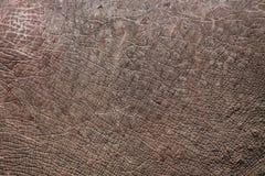 Δέρμα ρινοκέρων Στοκ εικόνες με δικαίωμα ελεύθερης χρήσης