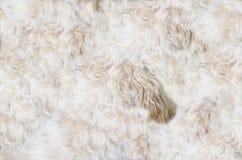 Δέρμα σκυλιών Στοκ Φωτογραφίες