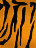 Δέρμα τιγρών Στοκ Εικόνα