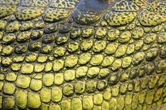 Δέρμα του gavial Στοκ εικόνες με δικαίωμα ελεύθερης χρήσης