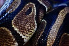 Δέρμα φιδιών από μια σφαίρα python στοκ εικόνες