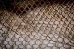 Δέρμα φιδιών - σύσταση στοκ εικόνα με δικαίωμα ελεύθερης χρήσης