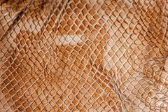 Δέρμα φιδιών - σύσταση στοκ φωτογραφία