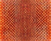 Δέρμα φιδιών στοκ εικόνες