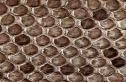 Δέρμα φιδιών Στοκ φωτογραφία με δικαίωμα ελεύθερης χρήσης