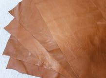 Δέρμα 1 στοκ εικόνες με δικαίωμα ελεύθερης χρήσης
