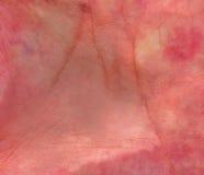 δέρμα Στοκ εικόνα με δικαίωμα ελεύθερης χρήσης