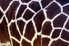 Δέρμα giraffe στοκ εικόνες με δικαίωμα ελεύθερης χρήσης