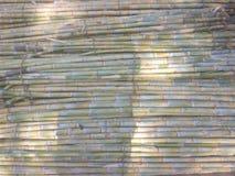 Δέσμες ζαχαροκάλαμων κατά τη διάρκεια καυτού θερινή περίοδο στοκ φωτογραφία
