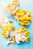 Δέσμες του κίτρινου pleurotus Στοκ Φωτογραφία
