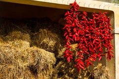 Δέσμες των καυτών πιπεριών που γρατσουνίζονται κοντά στο σανό Στοκ φωτογραφία με δικαίωμα ελεύθερης χρήσης