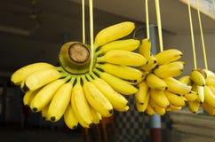 Δέσμες των μπανανών στοκ εικόνες με δικαίωμα ελεύθερης χρήσης