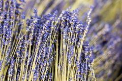 Δέσμες των ξηρών lavender κλαδίσκων λουλουδιών Σωρός του χορταριού lavandula Διακόσμηση στην υπηρεσία ανθοκόμων κατάστημα απεικόν Στοκ εικόνα με δικαίωμα ελεύθερης χρήσης
