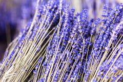 Δέσμες των ξηρών lavender κλαδίσκων λουλουδιών Σωρός του χορταριού lavandula Διακόσμηση στην υπηρεσία ανθοκόμων κατάστημα απεικόν Στοκ Εικόνες