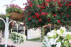 Δέσμες των λουλουδιών στον κήπο Ντουμπάι, Μέση Ανατολή θαύματος Στοκ Φωτογραφία