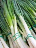 Δέσμες των φρέσκων πράσινων κρεμμυδιών Στοκ Φωτογραφία