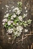 Δέσμη ανθών κήπων άνοιξη και παλαιό σκουριασμένο ψαλίδι στο αγροτικό ξύλινο υπόβαθρο Στοκ Φωτογραφίες