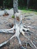 Δέσμη δέντρων Στοκ φωτογραφία με δικαίωμα ελεύθερης χρήσης