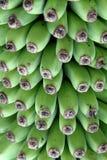 Δέσμη μπανανών Στοκ εικόνα με δικαίωμα ελεύθερης χρήσης