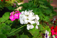 Δέσμη λουλουδιών Στοκ Εικόνες