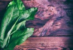 Δέσμη πράσινο sorrel Στοκ Εικόνες