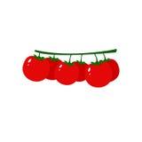 Δέσμη της κόκκινης φρέσκιας απομονωμένης ντομάτα διανυσματικής απεικόνισης Στοκ εικόνα με δικαίωμα ελεύθερης χρήσης