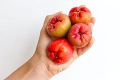 Δέσμη της ροδαλής Apple Στοκ Φωτογραφία