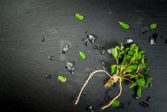 Δέσμη της φρέσκιας μέντας με τον πάγο στοκ φωτογραφίες με δικαίωμα ελεύθερης χρήσης