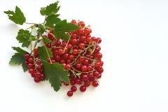 Δέσμη της juicy κόκκινης σταφίδας σε έναν κλαδίσκο με τα πράσινα φύλλα Στοκ εικόνα με δικαίωμα ελεύθερης χρήσης