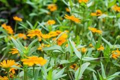Δέσμη του μικροσκοπικού κίτρινου λουλουδιού που ανθίζει με το φυσικό πράσινο υπόβαθρο Στοκ εικόνες με δικαίωμα ελεύθερης χρήσης