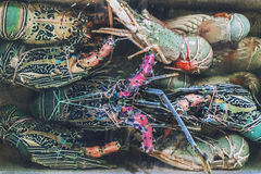 Δέσμη του φρέσκου αστακού στην τοπική αγορά ψαριών σε Jimbaran, Bal Στοκ Εικόνα