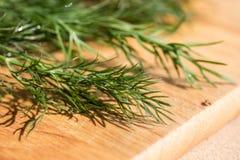 Δέσμη του φρέσκου οργανικού άνηθου σε ένα αγροτικό ξύλινο υπόβαθρο με το δ Στοκ εικόνες με δικαίωμα ελεύθερης χρήσης