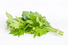 Δέσμη του φρέσκου πράσινου μαϊντανού που απομονώνεται Στοκ Φωτογραφία