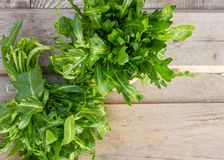 Δέσμη του φρέσκου πράσινου arugula στο κύπελλο στον ξύλινο πίνακα Το Arugula είναι Στοκ Φωτογραφίες