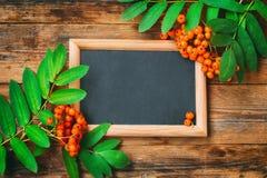 Δέσμη του ashberry κλάδου, πίνακας στο πλαίσιο Στοκ Εικόνες