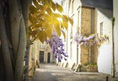 Δέσμη του wisteria με τις ακτίνες του ήλιου στο παλαιό μέρος της πόλης Le Mans στοκ εικόνες