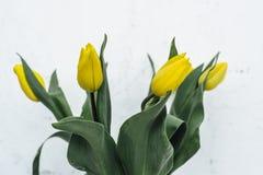 Δέσμη των κίτρινων τουλιπών στο άσπρο υπόβαθρο Στοκ Εικόνες