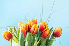 Δέσμη των κόκκινων και κίτρινων λουλουδιών τουλιπών στο punchy μπλε υπόβαθρο ενάντια στις λευκές κίτρινες νεολαίες άνοιξη λουλουδ Στοκ Εικόνα
